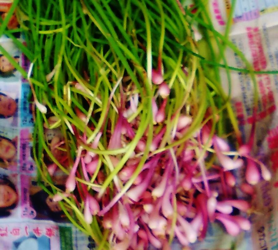 6山菜K2